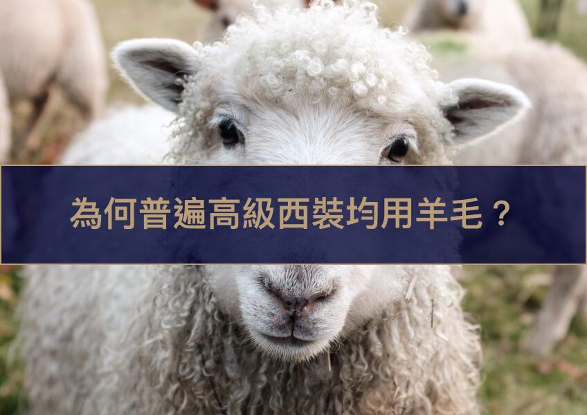 為何普遍高級西裝均用羊毛?
